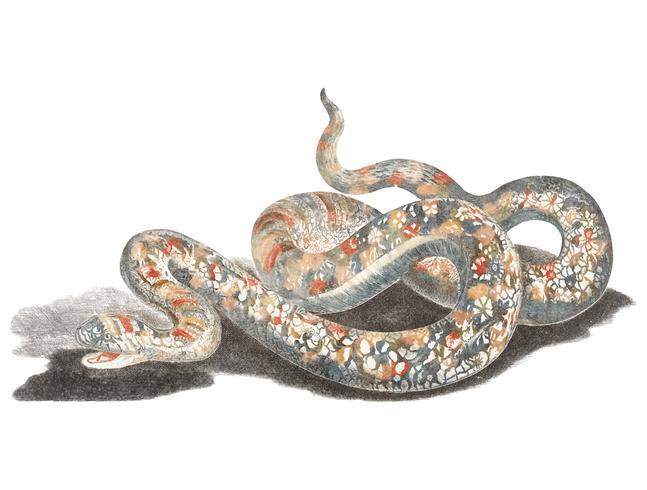 Vintage illustration of a snake