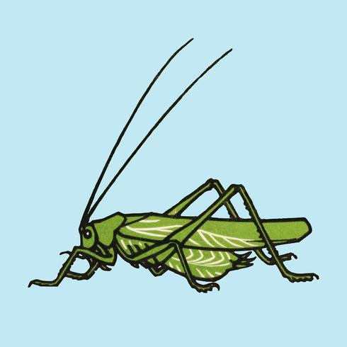 Grasshopper (1918) by Julie de Graag (1877-1924). Original from the Rijks Museum. Digitally enhanced by rawpixel.