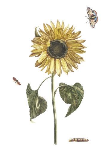Vintage Illustration einer Sonnenblume, eines Gleiskettenfahrzeugs und zweier Schmetterlinge