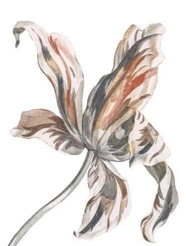 Illustration vintage d'une tulipe