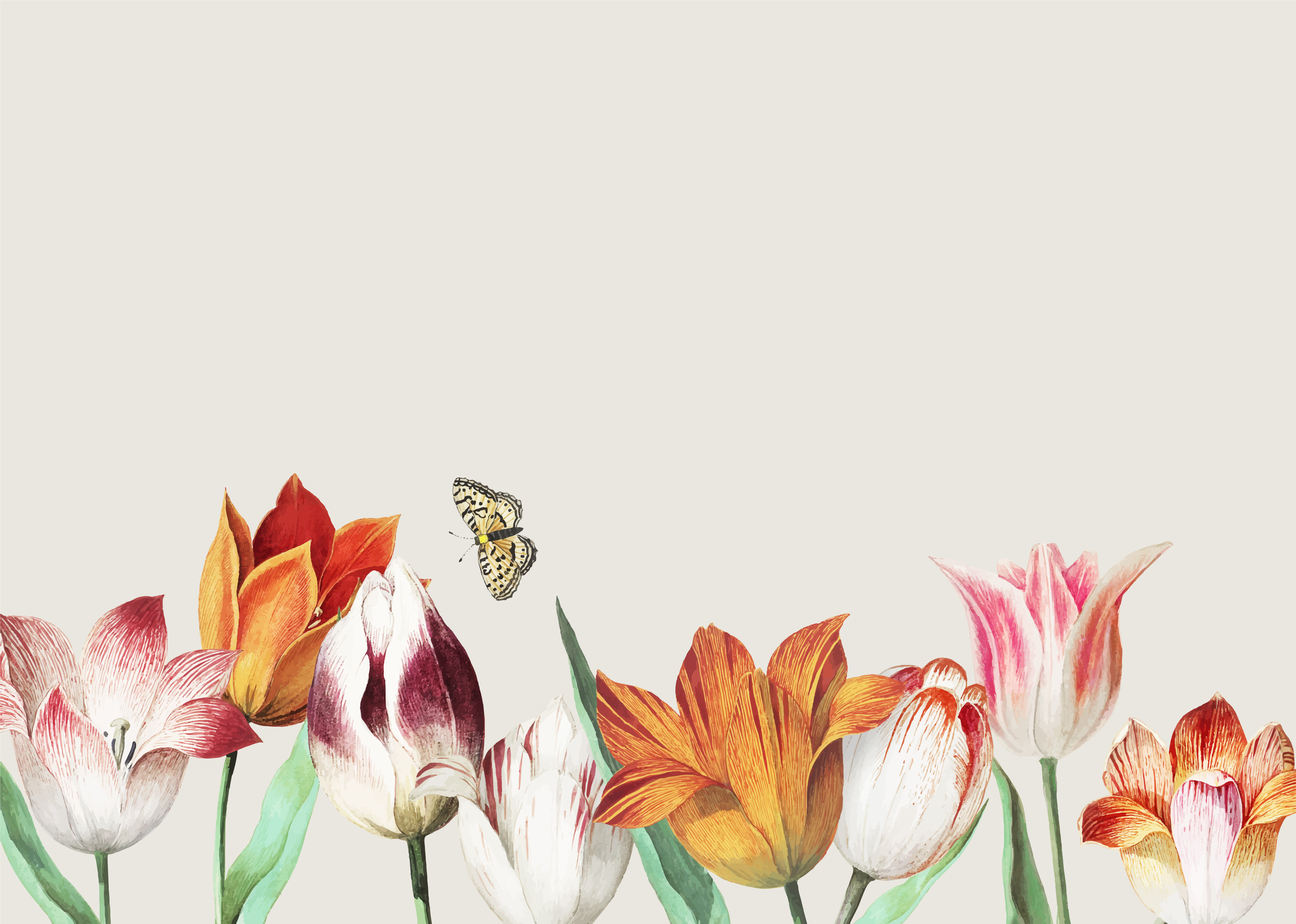 Tulip field border - Download Free Vectors, Clipart ...Tulips Page Borders Clipart Free