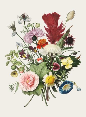 Ilustración vintage de ramo de flores