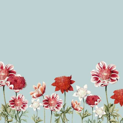 Cadre de fleur d'anémone rouge et blanc dessiné à la main