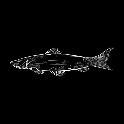 Weinleseillustration eines Fisches