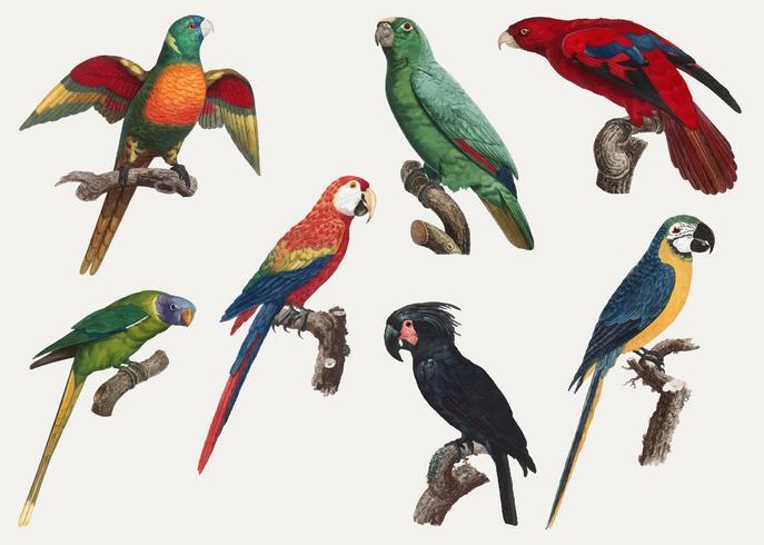Macaw design vintage
