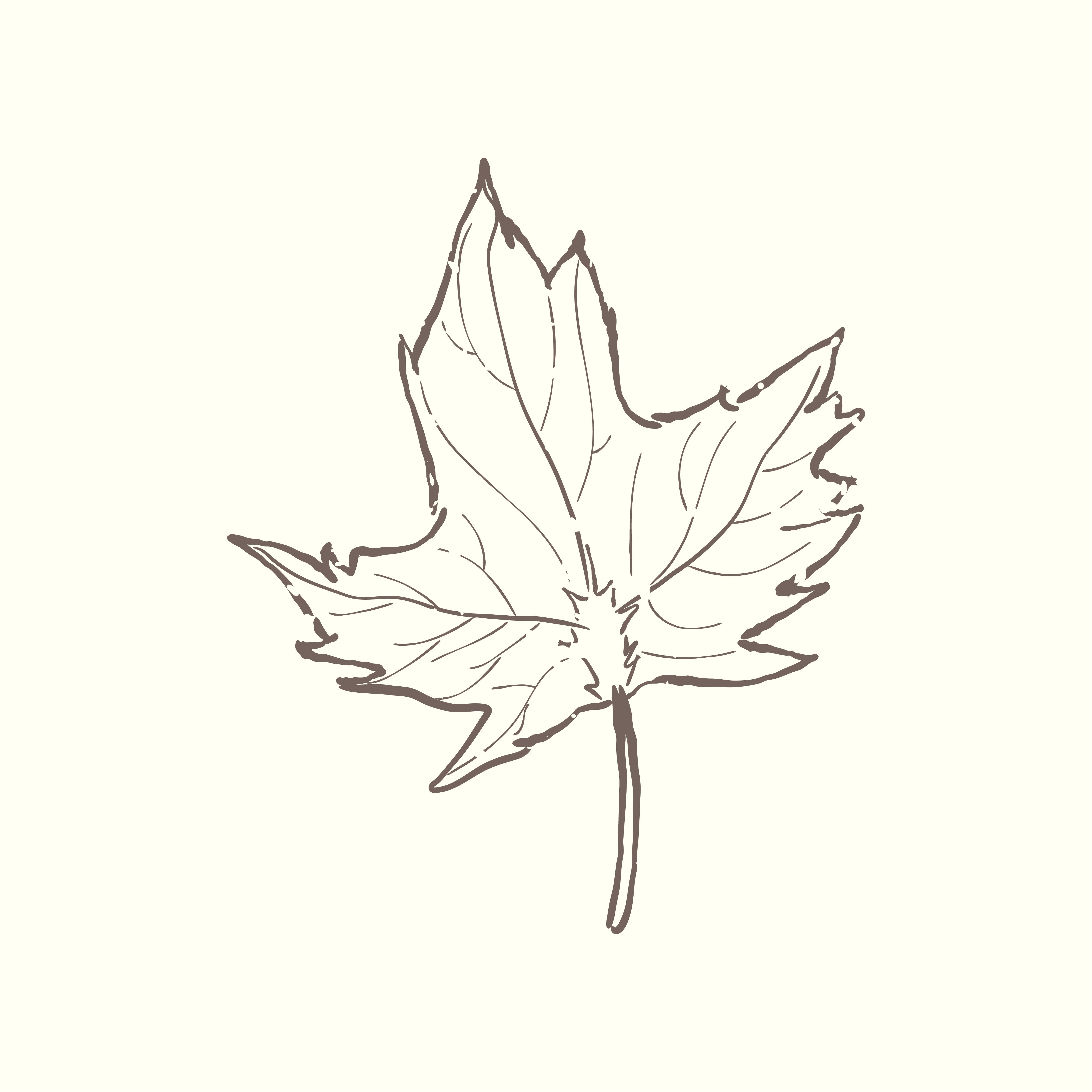leaf sketch free vector art