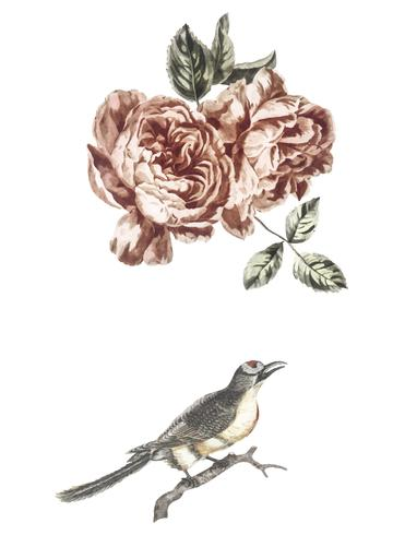Vintage illustration of a two roses and a bird