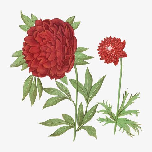 Peonia e anemone in stile vintage
