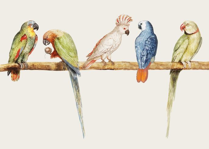 Parrot sort i vintage stil