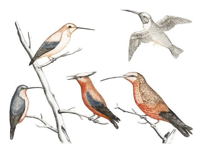 Vintage illustration of a Five hummingbirds
