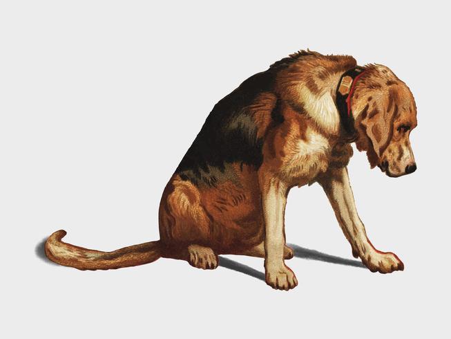 Suspense (1877) por Sir Edwin Landseer, um mastim vitoriano do bloodhound que espera. Digitalmente aprimorada pelo rawpixel.