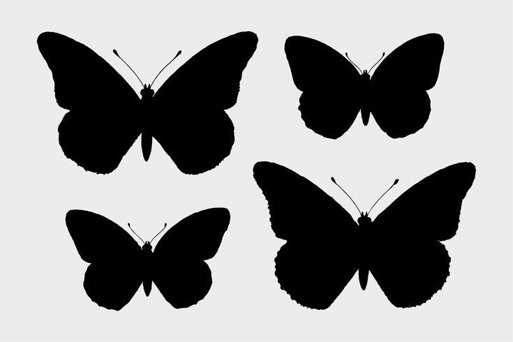 Farfalla monarca (Danais Archippus) di Falene e farfalle degli Stati Uniti (1900) di Sherman F. Denton (1856-1937). Miglioramento digitale di rawpixel.