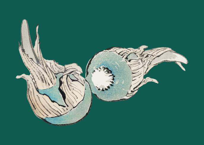 Threeleaf Arrowhead av K? No Bairei (1844-1895). Digitalt förbättrad från vår egen ursprungliga 1913-upplagan av Bairei Gakan.