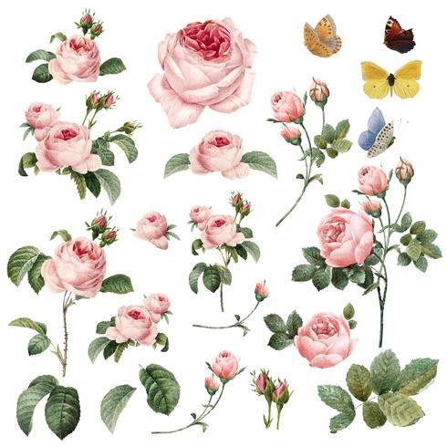 Accumulazione disegnata a mano di vettore delle rose rosa