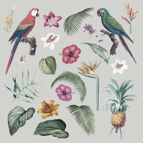 Macaw gebladerte illustratie