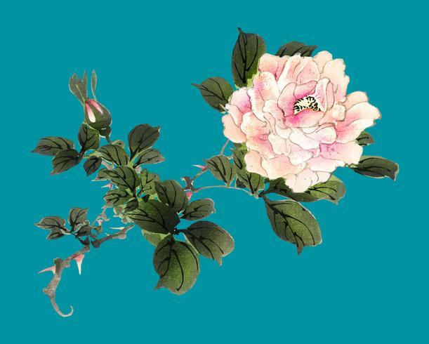 Rosa ros av K? No Bairei (1844-1895). Digitalt förbättrad från vår egen ursprungliga 1913-upplagan av Bairei Gakan.