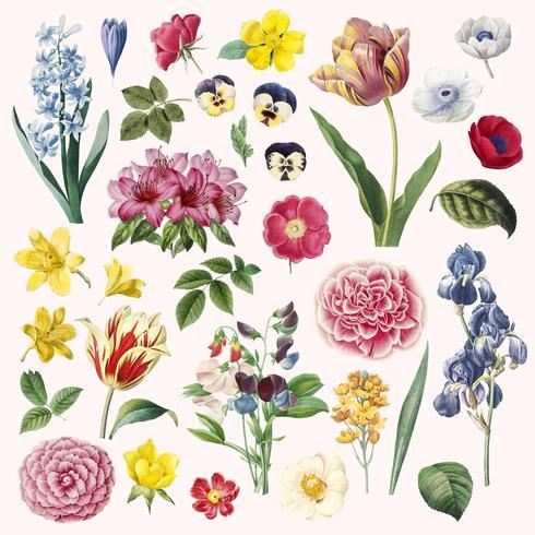 Set de pintura de diferentes flores. vector
