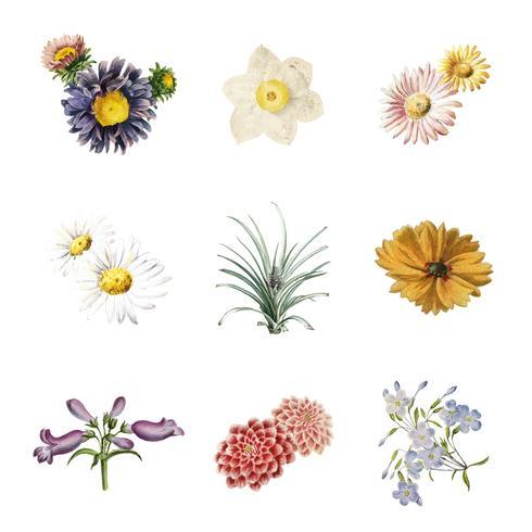 Flores en flor