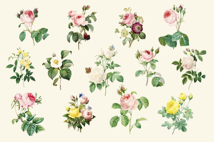 Set di belle rose in fiore