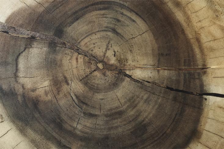 Conception de fond texturé tronc d'arbre