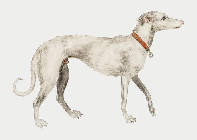 Windhund im Vintage-Stil