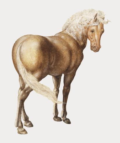 Cavallo in stile vintage