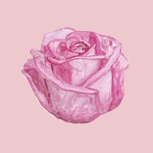 Ilustração, de, desenho, rosa, flor