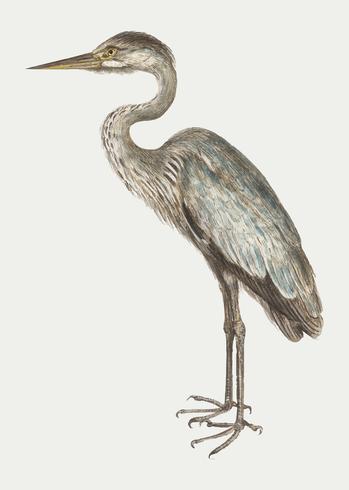 Blue heron in vintage style