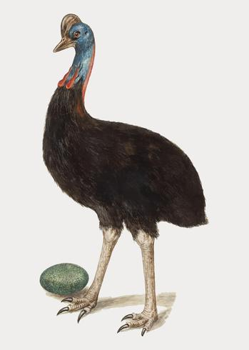 Cassowary in vintage style