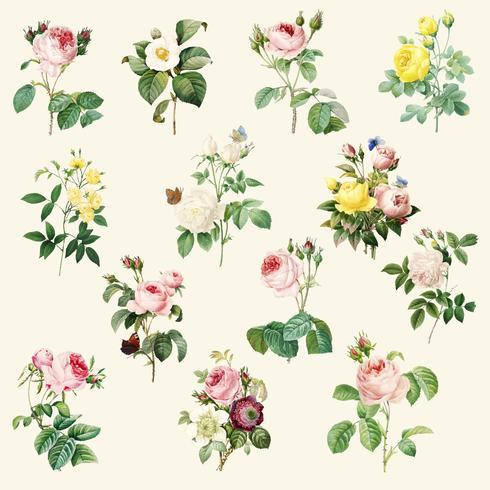 Set med vackra blommande rosor