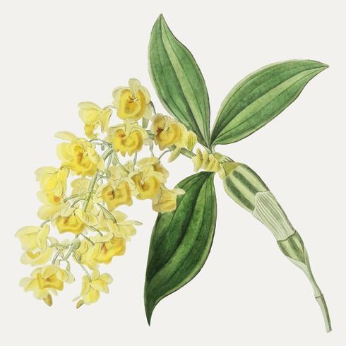 Gelbe Blumenzweig