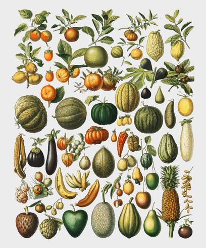 Illustration vintage d'une grande variété de fruits et de légumes de l'ouvrage Nouveau Larousse Illustre (1898), de Larousse, Pierre, Augé et Claude, mise en valeur numérique par rawpixel.