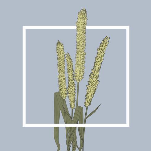 Ilustração, de, casa, plantas
