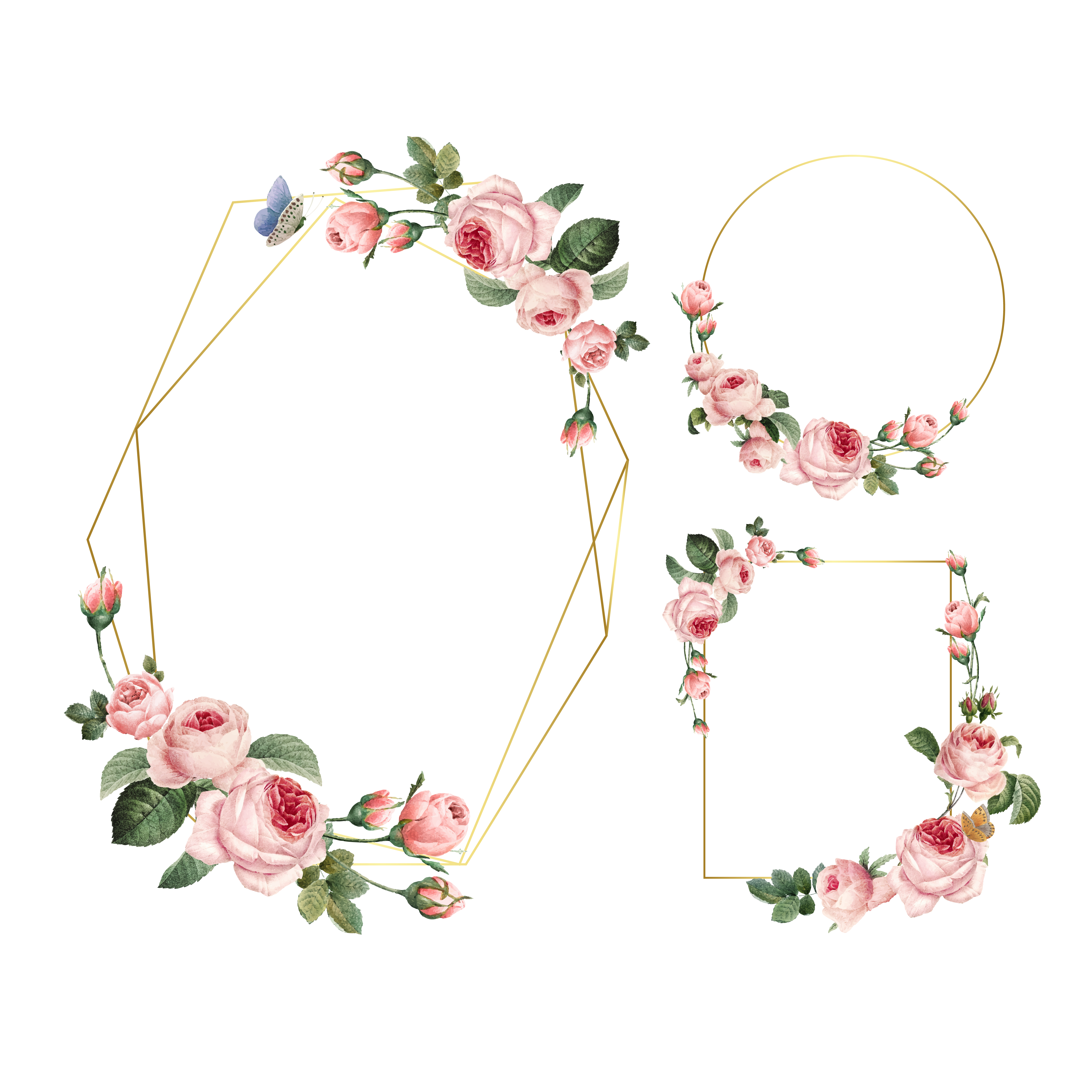 Hand Drawn Blank Pink Roses Frames On White Background