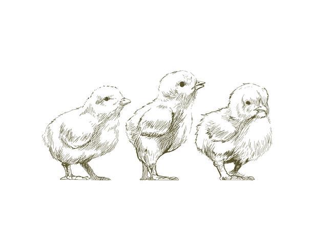 Illustration ritning stil av kyckling