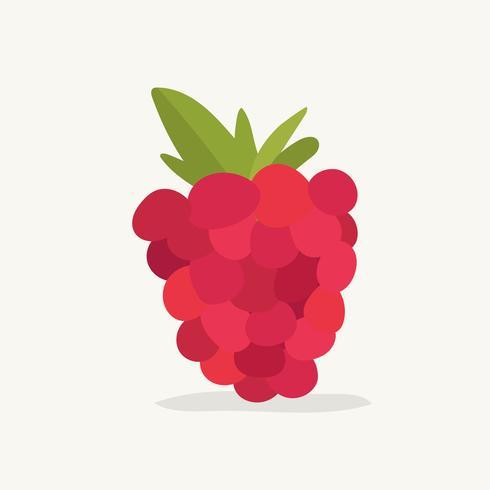 Dibujado a mano ilustración de fruta frambuesa