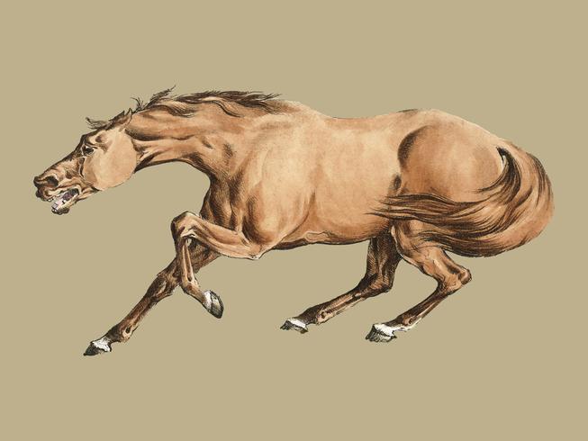 Ilustração de cavalo castanho claro de Sporting Sketches (1817-1818) por Henry Alken (1784-1851). Digitalmente aprimorada pelo rawpixel.