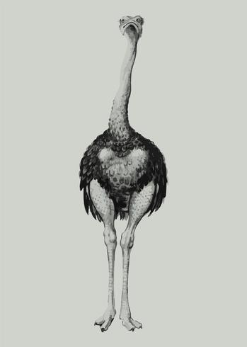 Struisvogel in vintage stijl