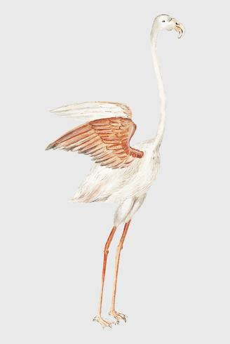 Flamingo in stile vintage