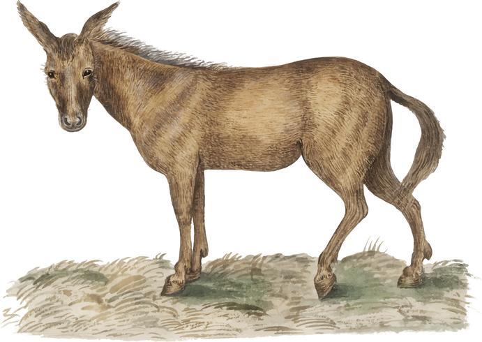 Mule i vintage stil