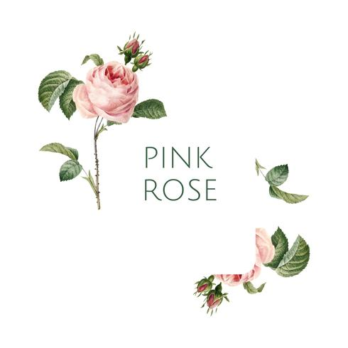 Hand getekend roze roos embleem vector
