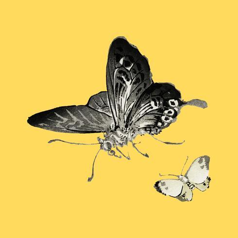Schmetterlinge von K? No Bairei (1844-1895). Digital verbessert aus unserer eigenen Originalausgabe von Bairei Gakan von 1913