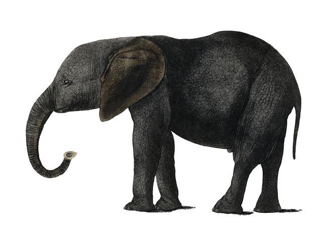La historia de la tierra y la naturaleza animada (1848) de Oliver Goldsmith (1728-1774), un retrato de un elefante gris oscuro. Mejorado digitalmente por rawpixel.