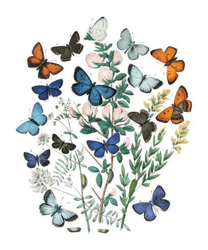 Illustrations du livre European Butterflies and Moths de William Forsell Kirby (1882), un kaléidoscope de papillons et de chenilles flottant au vent. Augmenté numériquement par rawpixel.