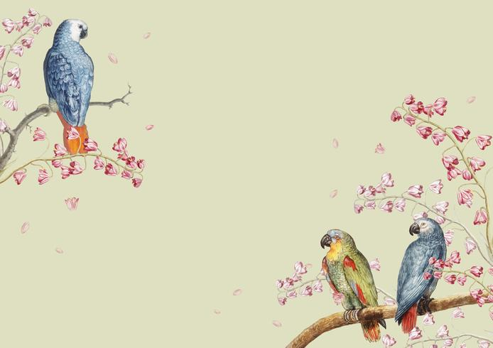 Papageien Mockup Grenze