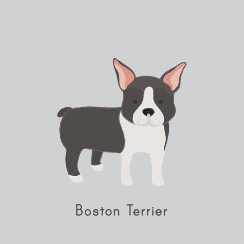 Cute illustration of a boston terrier dog