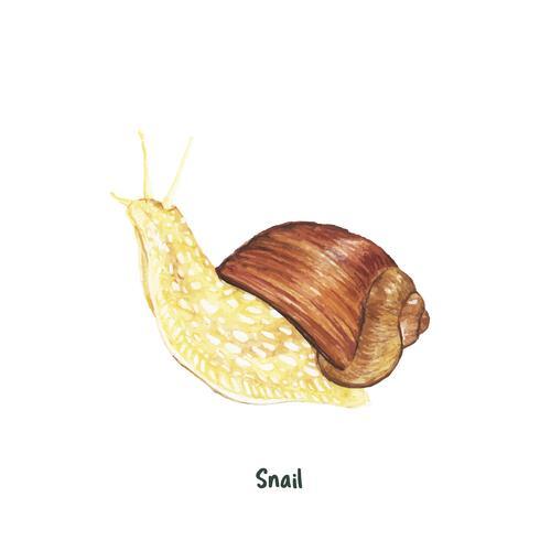 Escargot dessiné à la main isolé sur fond blanc