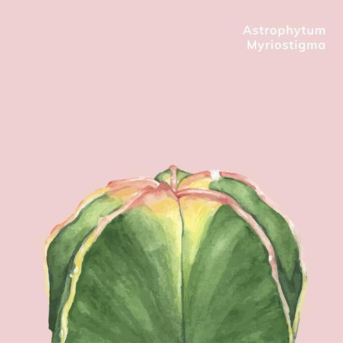 Hand getrokken astrophytum myriostigma bisschop cap cactus