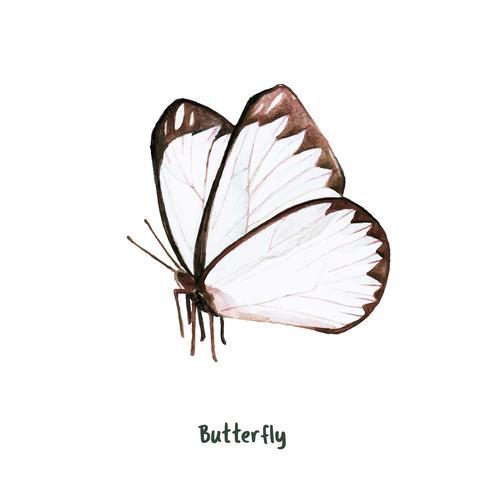 Hand gezeichneter Schmetterling lokalisiert auf weißem Hintergrund