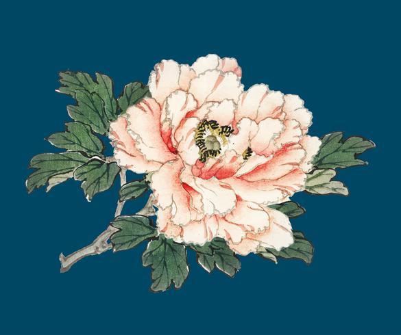 Rosa rosa di K? No Bairei (1844-1895). Miglioramento digitale della nostra originale edizione 1913 di Bairei Gakan.
